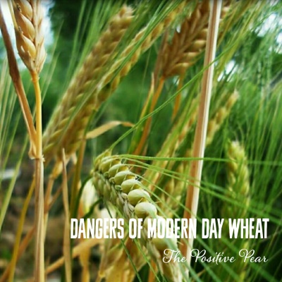 Dancers of Modern Day Wheat