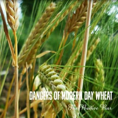 Dancers of Modern Day Wheat
